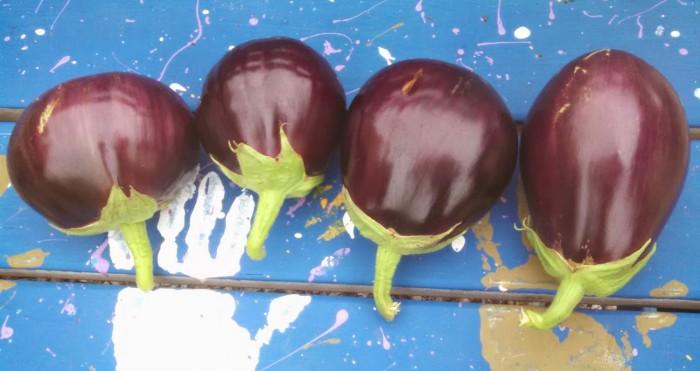 cropped-eggplants.jpg
